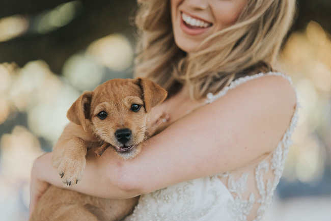 Cute puppy wedding blog, images by Oobaloos Photography (3)