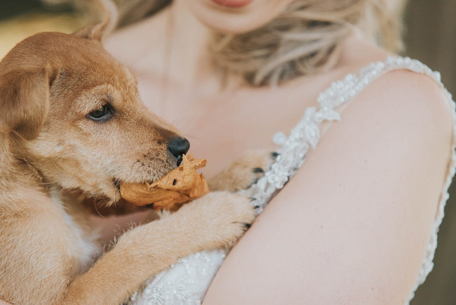 Cute puppy wedding blog, images by Oobaloos Photography (2)