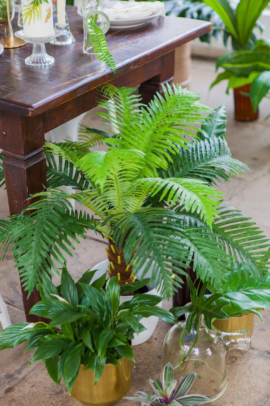 Houseplants and tropical wedding styling with www.amandakarenphotography.co.uk (12)