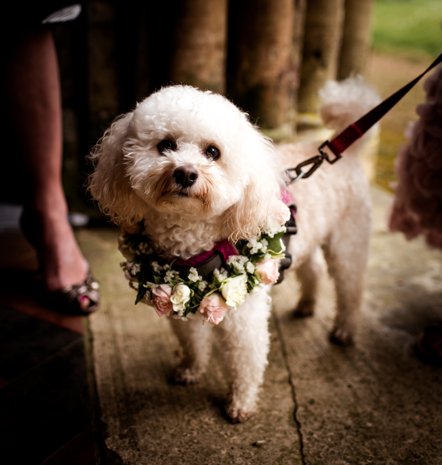 Pink flower wedding ideas and cute wedding dogs on English-Wedding.com with Robin Goodlad Photography (18)