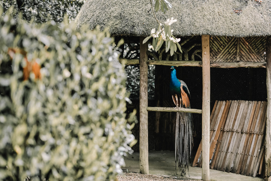 Peacock wedding styling ideas at Larmer Tree Gardens, image credit Oobaloos Photography (17)