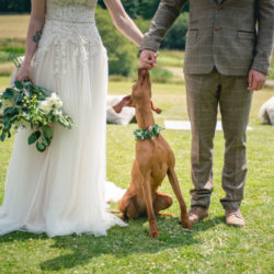A Styled Dog-Friendly Elopement in Cornwall