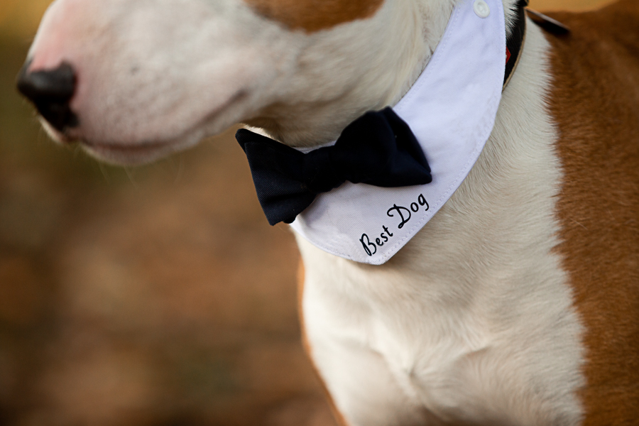 wedding magazine shoot with dogs accessories, photo by Katherine and her Camera (11)