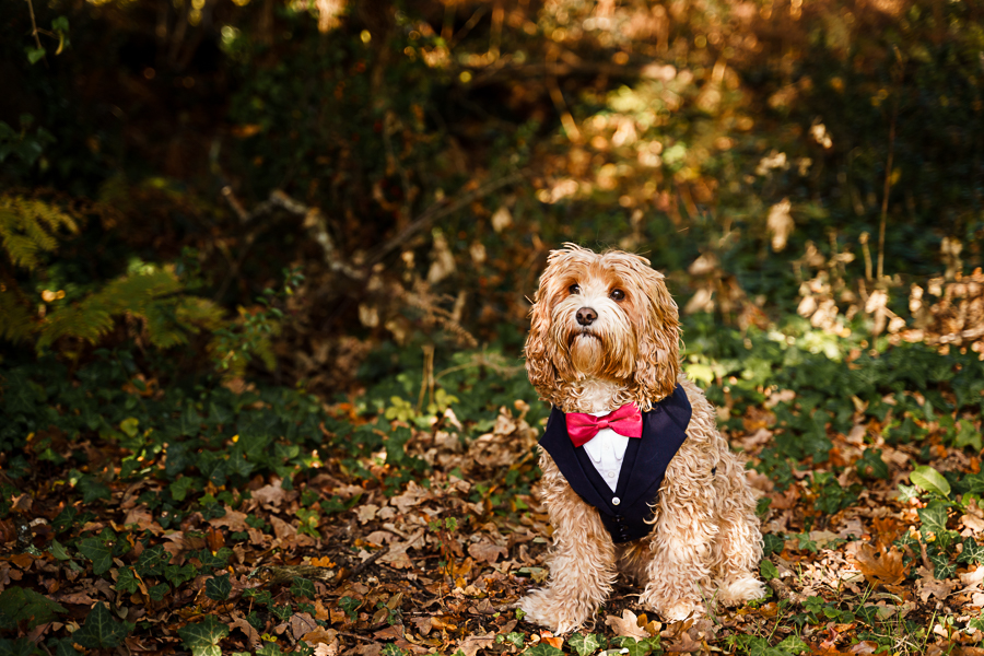 wedding magazine shoot with dogs accessories, photo by Katherine and her Camera (13)