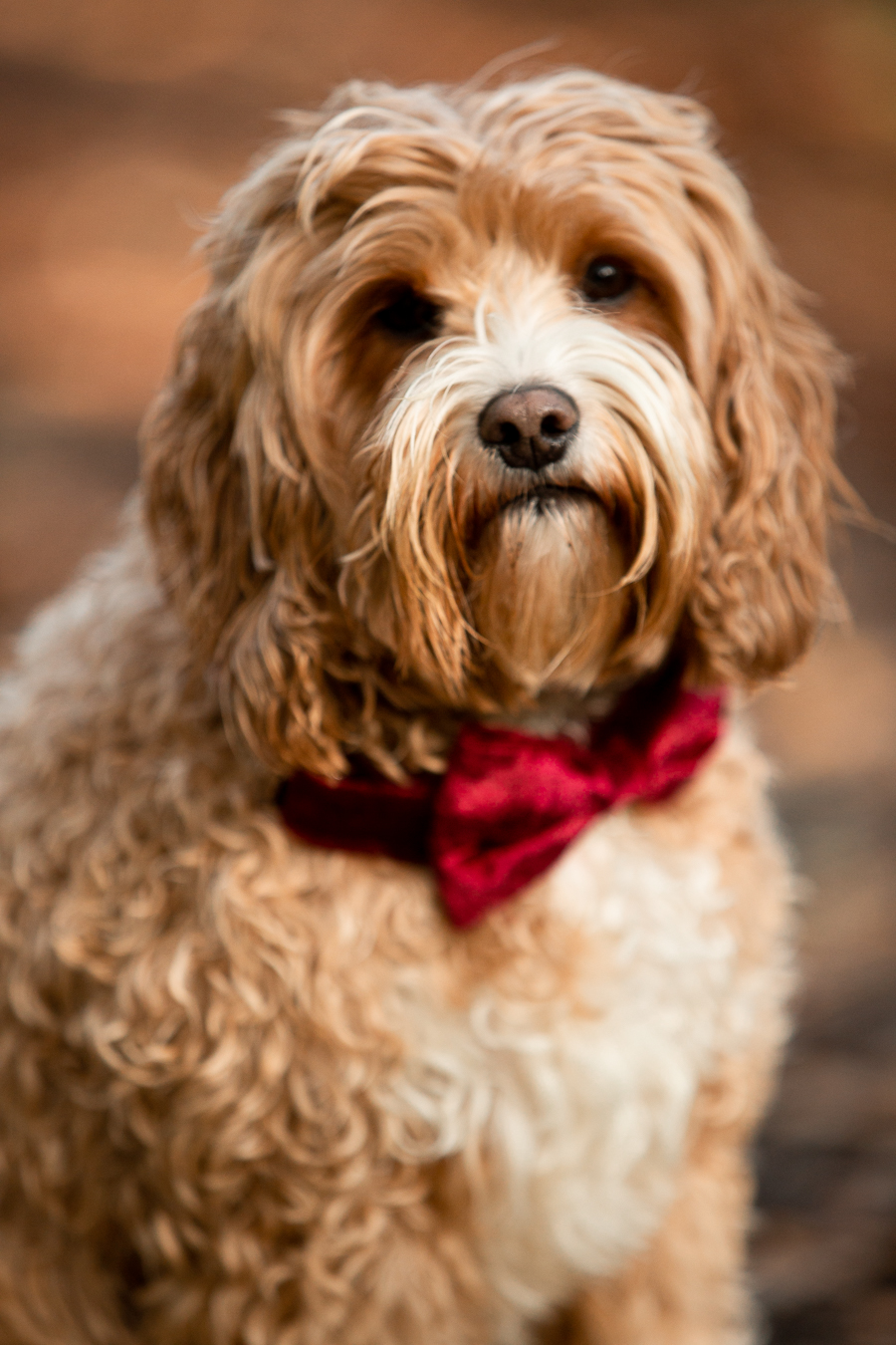 wedding magazine shoot with dogs accessories, photo by Katherine and her Camera (14)