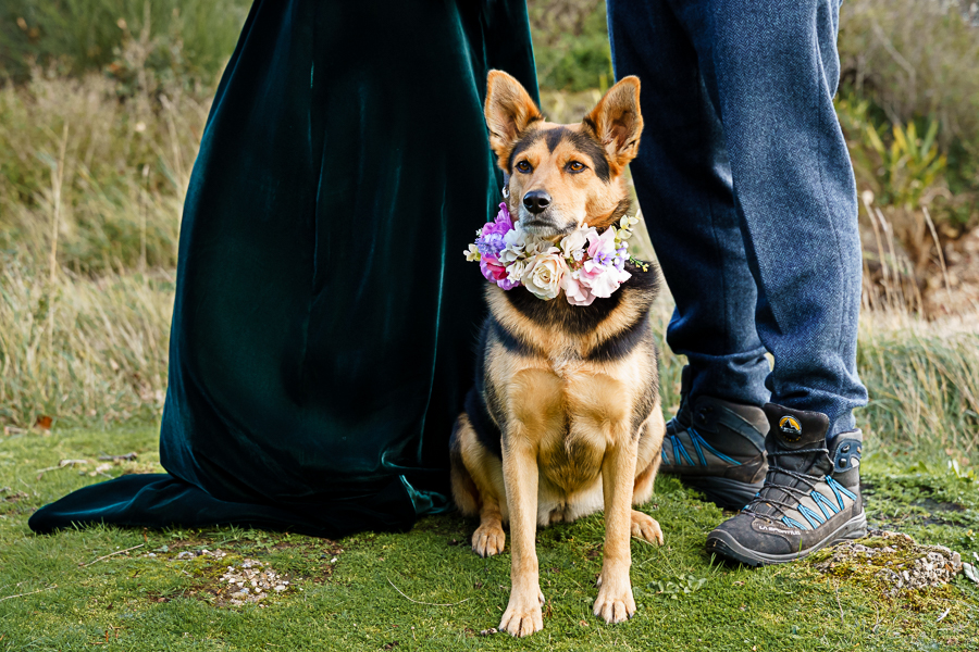 wedding magazine shoot with dogs accessories, photo by Katherine and her Camera (17)