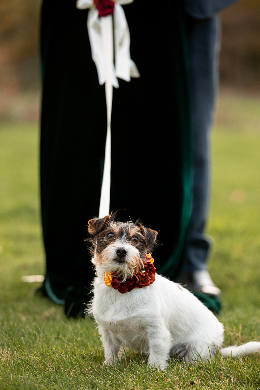 wedding magazine shoot with dogs accessories, photo by Katherine and her Camera (32)