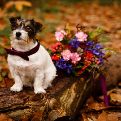 Cosy bridal style with about a million cute pooches!