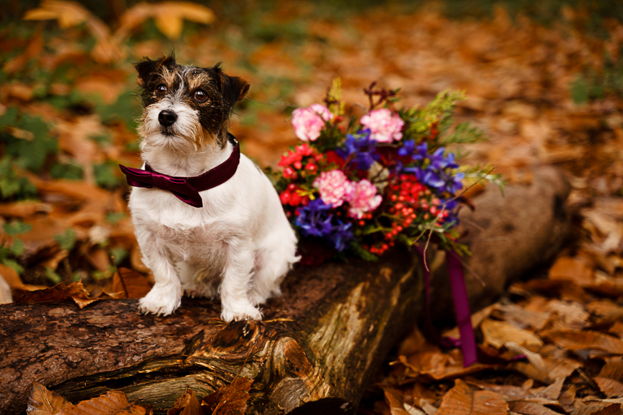 wedding magazine shoot with dogs accessories, photo by Katherine and her Camera (57)