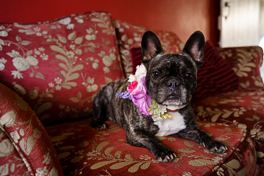 wedding magazine shoot with dogs accessories, photo by Katherine and her Camera (8)