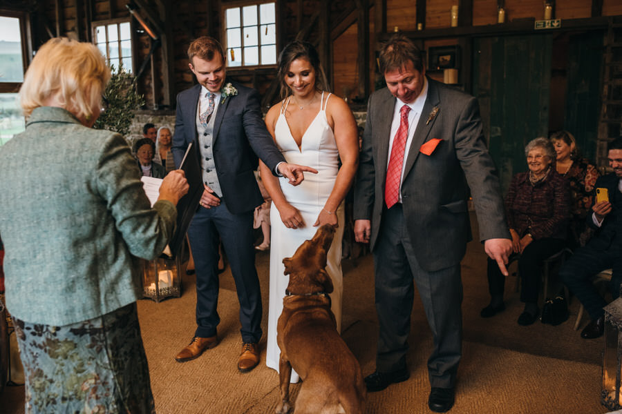 Brilliant collection of animals at weddings photos by Somerset photographer Simon Biffen on English Wedding (10)