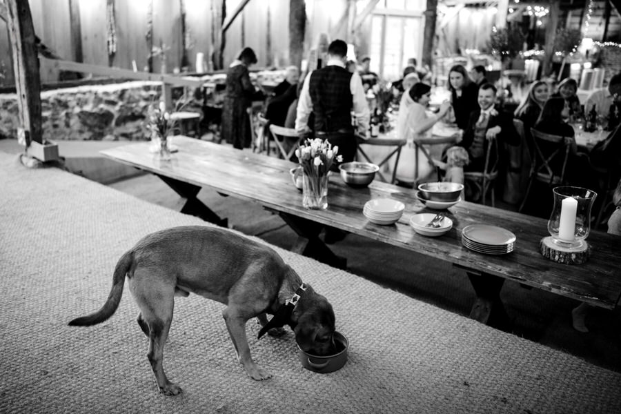 Brilliant collection of animals at weddings photos by Somerset photographer Simon Biffen on English Wedding (12)