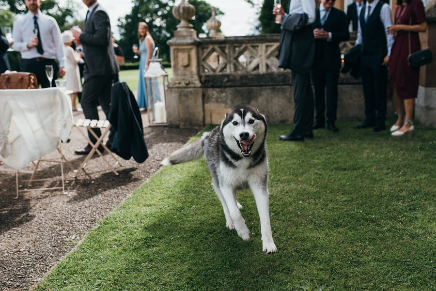 Brilliant collection of animals at weddings photos by Somerset photographer Simon Biffen on English Wedding (14)