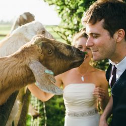 Wedding ideas for animal lovers – from pooches to peacocks! (with photos)