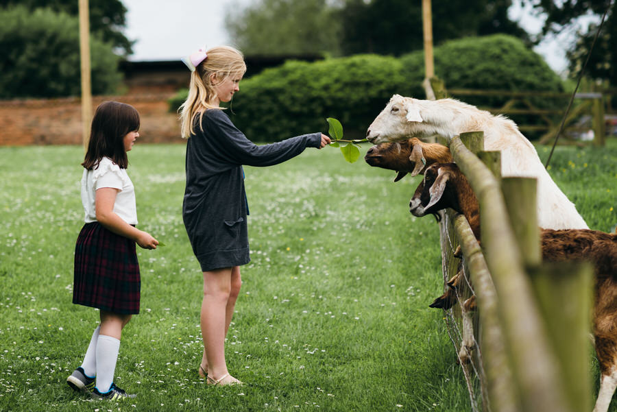 Brilliant collection of animals at weddings photos by Somerset photographer Simon Biffen on English Wedding (17)