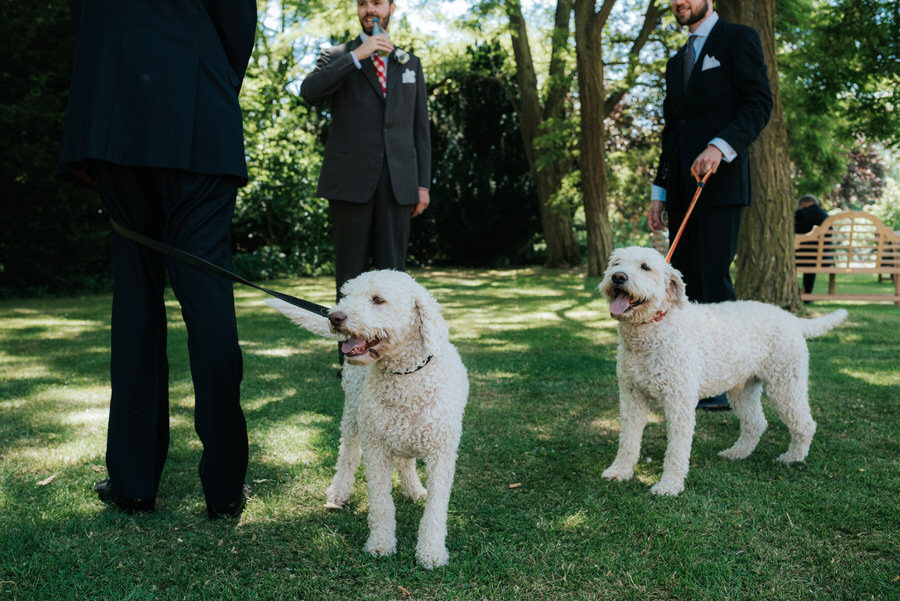 Brilliant collection of animals at weddings photos by Somerset photographer Simon Biffen on English Wedding (18)