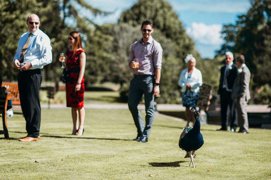 Brilliant collection of animals at weddings photos by Somerset photographer Simon Biffen on English Wedding (21)