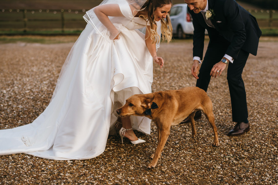 Brilliant collection of animals at weddings photos by Somerset photographer Simon Biffen on English Wedding (23)