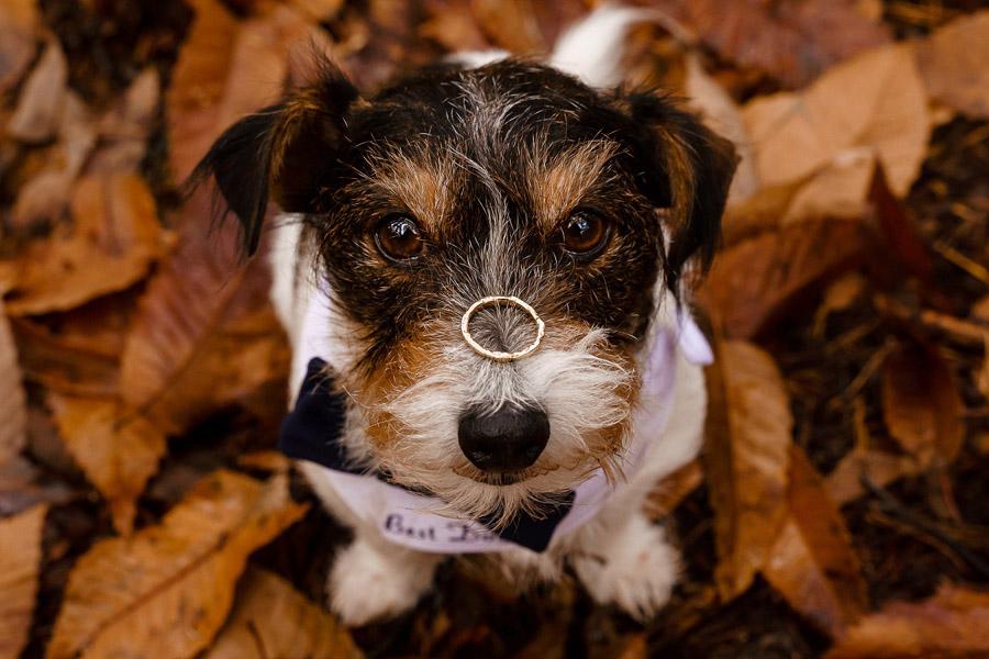 Katherine and her Camera, dog-friendly Hampshire wedding photographer
