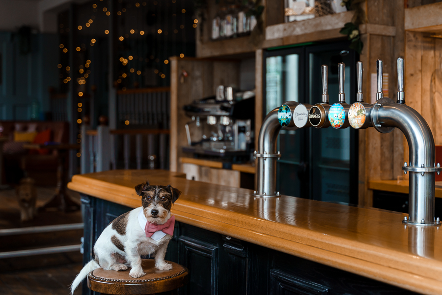 A loved-up Winchester city elopement - with adorable dogs! Photographer credit Katherine and her Camera (11)