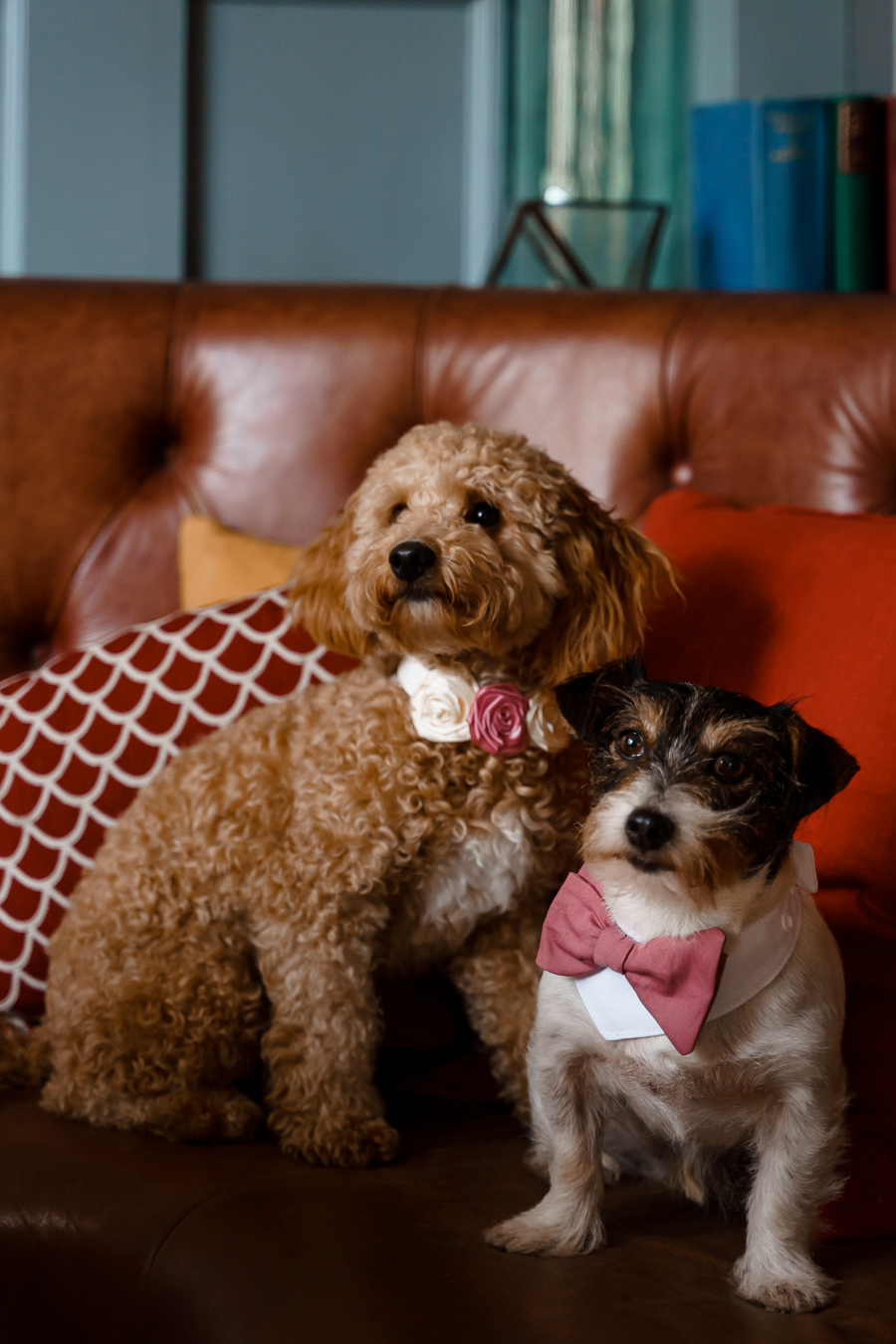 A loved-up Winchester city elopement - with adorable dogs! Photographer credit Katherine and her Camera (13)